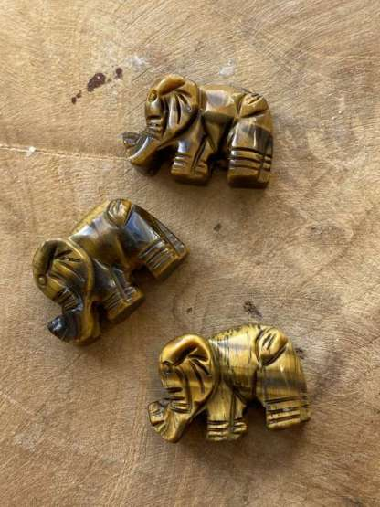 olifant tijgeroog